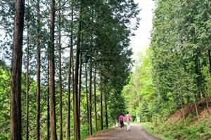 여름휴가, 힐링 공간 완주 상관 편백숲이 뜬다
