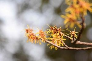 대구수목원에서 아름다운 꽃과 함께 봄을 맞이하세요