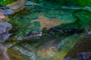 단양다누리아쿠아리움, 양서파충류존 새로운 전시생물 소개
