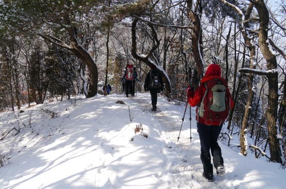 소나무 숲 사이로 평탄한 숲길이 이어진다.