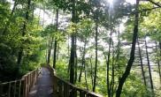 나무랄 데 없는 나무의 마을, 횡성 '숲체원'