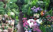 온 동네, 꽃동네 양재시민의숲-꽃시장 산책