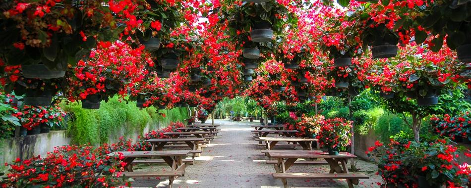 사계절 내내 아름다운 꽃밭, 아산세계꽃식물원