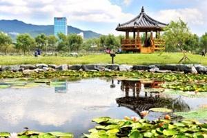 사계절 꽃이 피어나는 곳, 삼락생태공원,국내여행,음식정보