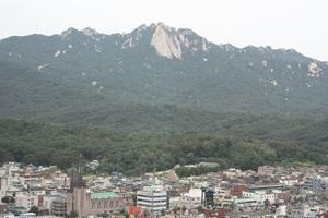 도봉산 계곡따라 능소화가 지천,경기도 의정부시