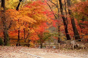 600여 년의 원시림이 만든 비경, 포천 국립수목원,경기도 포천시