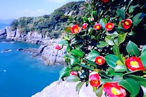 봄에는 동백섬이라네, 여수 오동도,전라남도 여수시