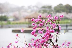 당진에서 불어오는 봄 향기 '면천 진달래 민속축제',충청남도 당진시