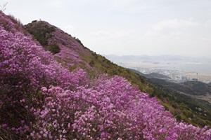 낮은 산봉우리도 봄에는 제일이라, 여수 영취산 진달래,전라남도 여수시