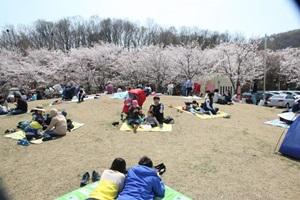 벚꽃과 함께하는 봄날의 여유로운 기억, 의왕 벚꽃축제,경기도 의왕시