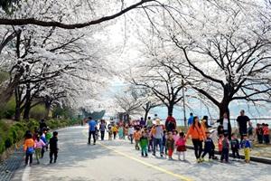 벚꽃 터널을 걷다 '충주호 봄나들이 한마당',충청북도 충주시