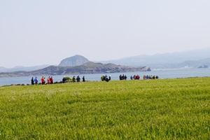 초록이 봄을 말하는 곳, 서귀포 가파도청보리축제,제주특별자치도 서귀포시