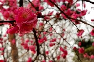 도심 속에 꽃향기를 퍼뜨리다, 봉은사의 봄,서울특별시 강남구