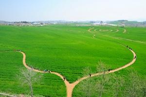 초록이 빚은 풍경 '고창 청보리밭 축제',전라북도 고창군