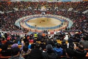 우직한 소들의 한판 승부 '청도 소싸움 축제',경상북도 청도군