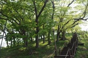 법성포를 지키는 느티나무 숲, 영광 숲쟁이공원,국내여행,음식정보