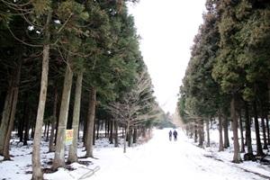 사박사박, 눈 내린 풍경이 더욱 신비로운 사려니숲길 산책,제주특별자치도 제주시