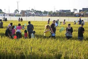 김제지평선축제, 하늘과 맞닿은 땅의 잔치,전라북도 김제시