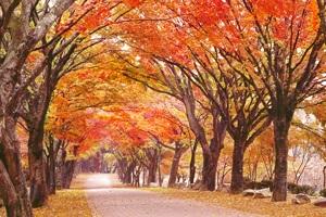 가을 단풍의 대명사, '내장산'의 다양한 매력,전라북도 정읍시
