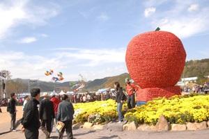 청송 사과 맛 보러 갈까? 청송사과축제,국내여행,음식정보