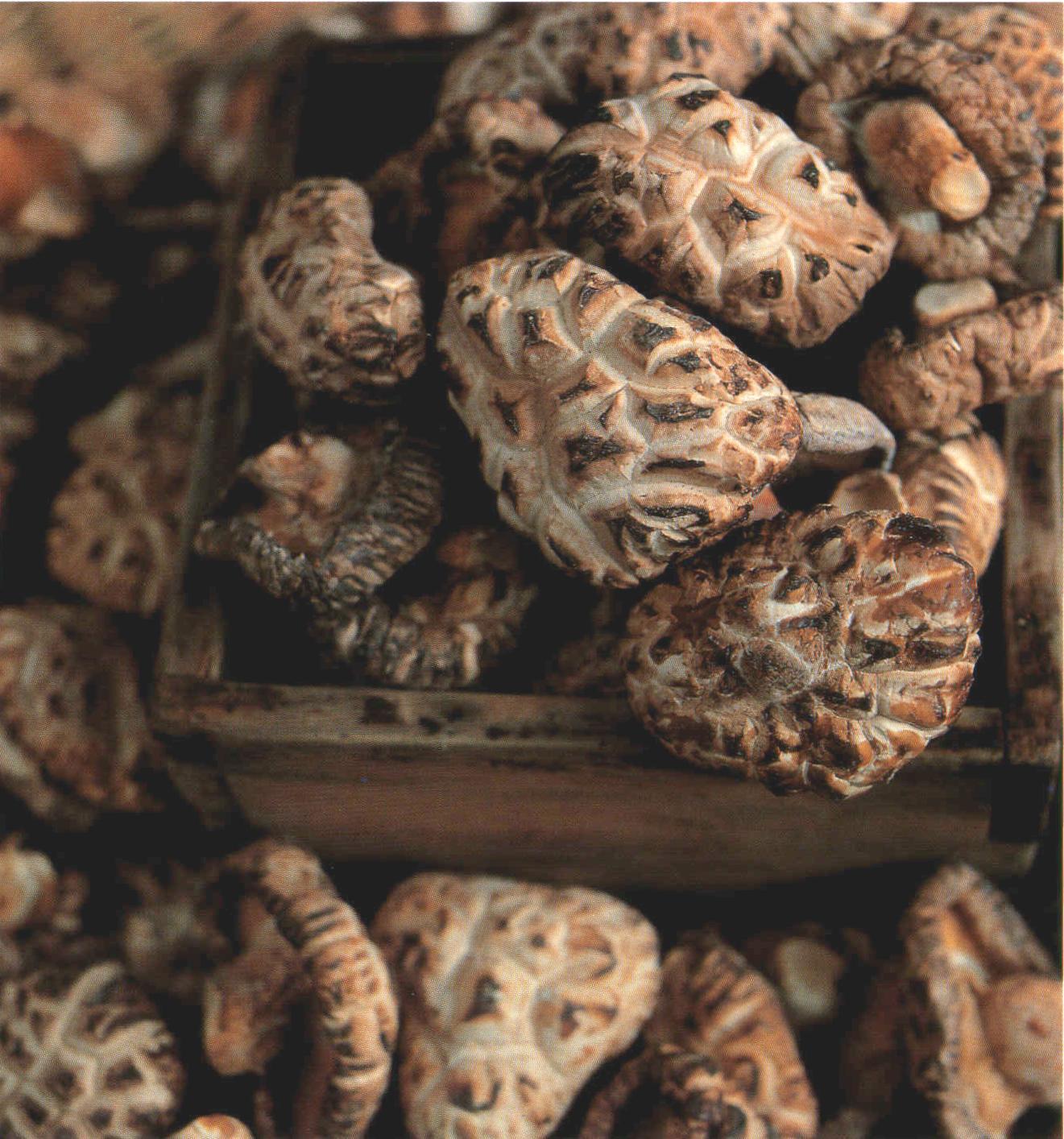 표고버섯,전라북도 완주군,지역특산물