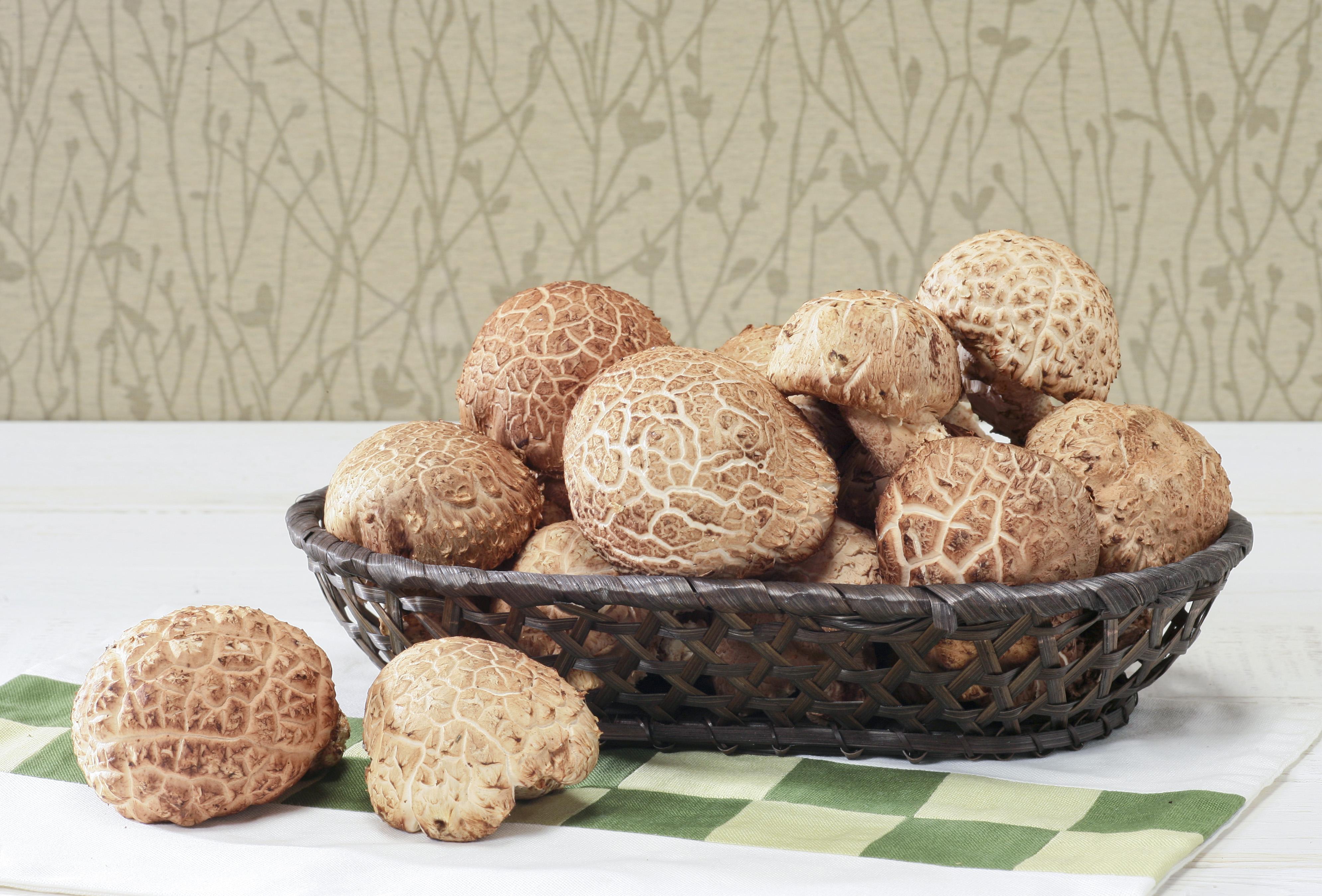 표고버섯,전라북도 장수군,지역특산물