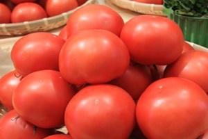 지산 토마토,국내여행,음식정보