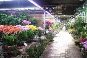 꽃,대구광역시 달서구,지역특산물