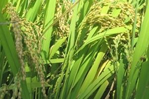 복조리 찰메쌀,국내여행,음식정보