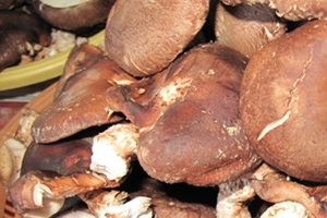 표고버섯 (하우스 재배),국내여행,음식정보