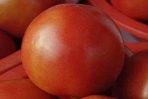토마토,국내여행,음식정보
