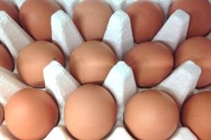 봉황농장 계란,경기도 화성시,지역특산물
