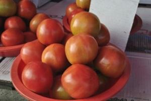 토마토,강원도 철원군,지역특산물