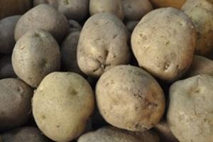 감자,강원도 평창군,지역특산물