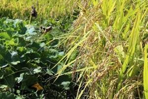 홍천 쌀,국내여행,음식정보