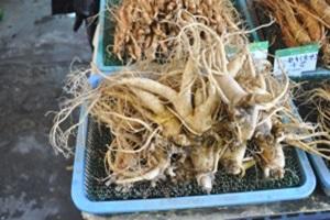 6년근 홍천인삼,국내여행,음식정보