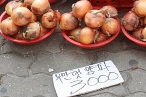 황토양파,국내여행,음식정보