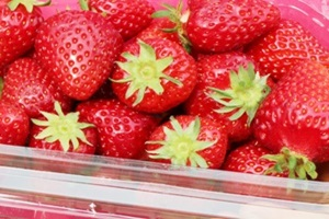 딸기 (삼례 고산 완창),전라북도 완주군,지역특산물