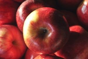 진안 사과,국내여행,음식정보
