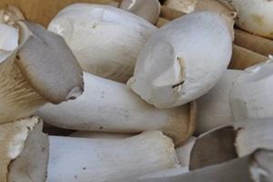 새송이버섯(하우스 재배),경상남도 의령군,지역특산물