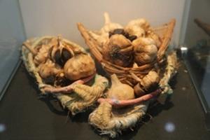 마늘,국내여행,음식정보