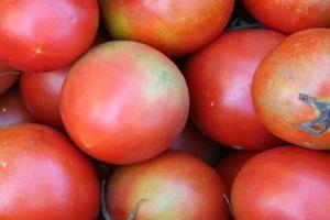 돌토마토,국내여행,음식정보