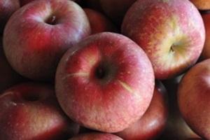 사과,충청북도 음성군,지역특산물