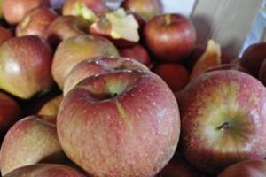 사과,국내여행,음식정보