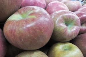 사과,경상북도 영양군,지역특산물