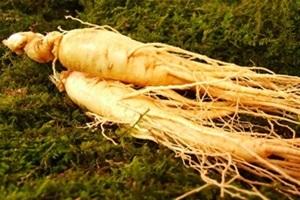 인삼,전라북도 진안군,지역특산물