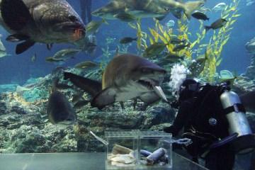 바다의 무법자상어(좌)와 귀여운 수달(우)도 관람할 수 있다.