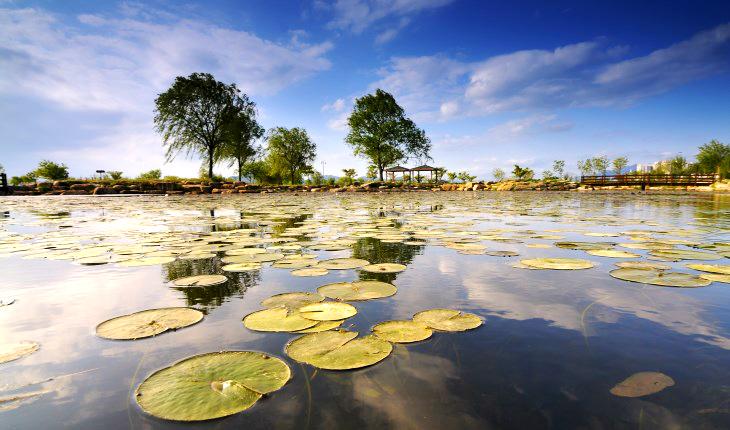 삼락생태공원은 약 140만 평의 넓은 공간에 조성돼 있다.
