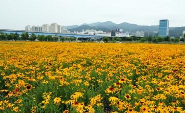 순서대로 삼락생태공원의 봄, 여름, 가을, 겨울 풍경. 삼락생태공원에는 사계절 꽃이 피어난다.
