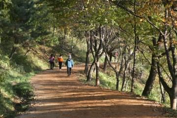 생생한 자연의 기운을 받으며 산길을 걷는 등산객들의 모습이 보인다.